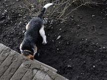 Islandská sopka Eyjafjallajökull chrlí sloup sopečného popela a dýmu. (22. dubna 2010)
