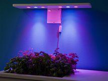 Bylinky jsou nasvícené LED diodami, které mění svou barvu a podporují růst rostlin