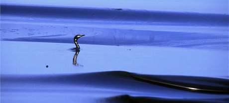1991 - ropná skvrna v Perském zálivu.