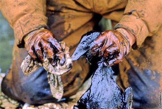 1989 - záchrana zví�at po havárii tankeru Exxon Valdez u pob�e�í Alja�ky.