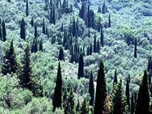 Řecko, Korfu. Olivy a cypřiše v okolí Lakones