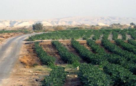 Zavlažování v údolí řeky Jordán v Jordánsku (2009)