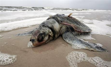 Ropná skvrna dosáhla pobřeží státu Mississippi a zabíjela
