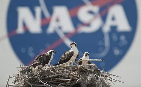 Orlovci říční hnízdící u montážní haly VAB