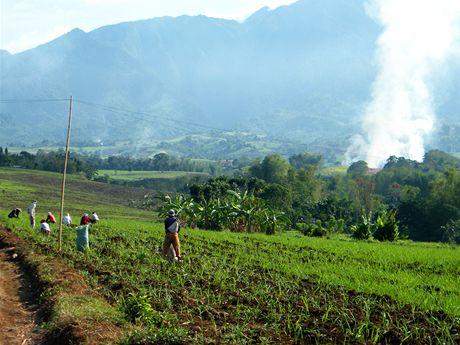 Pole s cukrovou třtinou na dohled sopky Mt. Kanlaon na filipínském ostrově Negros, kde hospodaří Fair Trade družstvo