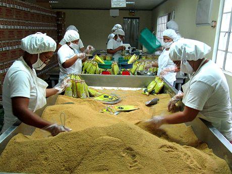 Z třtiny Fair Trade pěstitelů se vyrábí nerafinovaný přírodní cukr BIO Mascobado