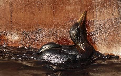 Ropou obalený pták zápasí s mazlavou látkou u zdi jednoho z plavidel poblíž zničené plošiny Deepwater Horizon, z jejíhož vrtu uniká do moře ropa (9. května 2010)