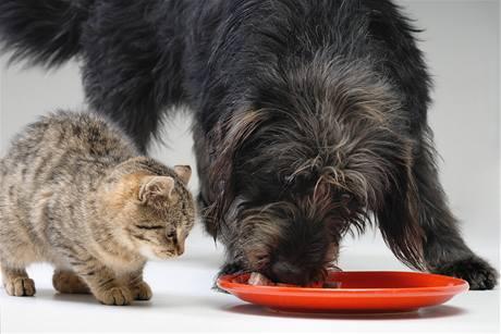 Oba patří mezi šelmy, jejich jídelníček se ale shoduje jen částečně.