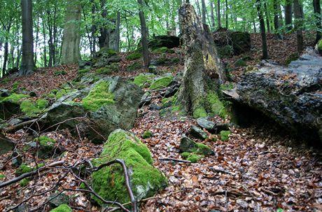 Nejkrásnější partie přírodní památky Rasuveň s malým kamenným mořem