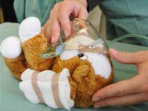 Studenti Střední zdravotní školy předvádí malým dětem na jejich plyšových hračkách, jak ošetřit drobná zranění.