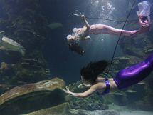 Mořské víly v londýnském akváriu