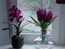 Mužský element vyvažuje vprostoru několik hedvábných rostlin, o které se není třeba starat