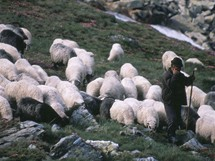 Rumunsko, Rodna, bača se svým stádem