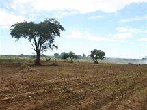 Farma ve městě Gweru, na které hospodaří někdejší prostitutky. Ještě před několika měsíci byly pozemky zaplevelené, nyní jsou už obdělané