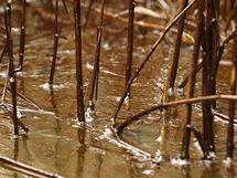 Pass a Loutre. Oblast v Louisianě, kterou zasáhla ropa z poničeného vrtu (2. června 2010)