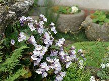 Rostliny vyr�staj�c� ze sp�r mezi kameny si prohl�dnete z p��stupov� cesty.