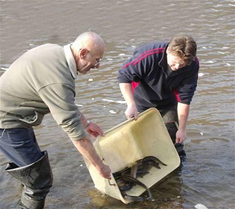 Návrat lososů a úhořů do našich řek