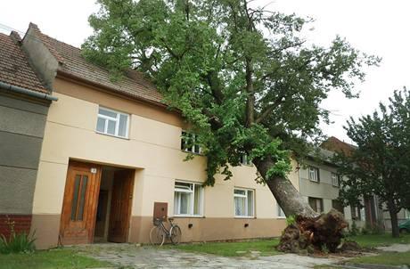 Při noční bouřce spadla lípa na dům v Kelčicích u Prostějova. (14. června 2010)