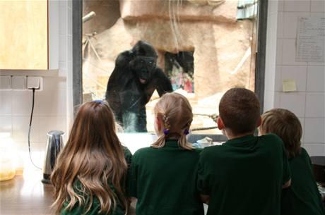 """Zleva zoologická náměstkyně, tisková mluvčí, """"malý ředitel"""" a ošetřovatel goril, v pozadí Moja."""