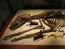 Kostra obětiny pro aztéckou bohyni země Tlaltecuhtli