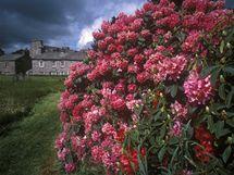 Attadale Garden, Velká Británie