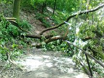 Následky prudké bouře ve Wilsonově lese v Brně (12. červen 2010)