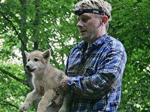 Deset arktických vlčat očkovali chovatelé v brněnské zoologické zahradě