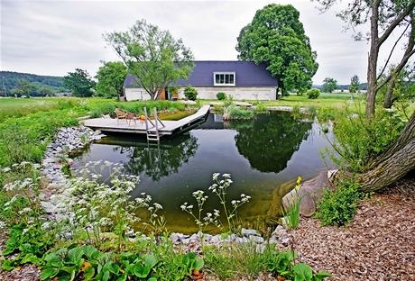 V zahradním rybníčku se daří rybám i vodním rostlinám