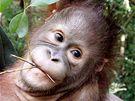 Školka pro orangutany