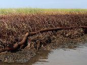 Louisianské mokřady poté, co je zasáhla ropná skvrna (19. června 2010)