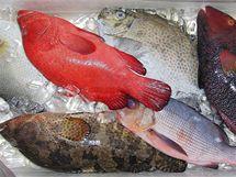 Ryby na trhu v Kota Kinabalu