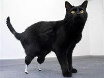 Britský kocour Oscar má na zadních nohou protézy