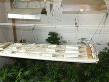 V bytě na Lesné v Brně odhalili policisté pěstírnu marihuany