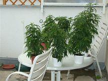 V pronajatém bytě na sídlišti Lesná v Brně odhalili policisté pěstírnu marihuany