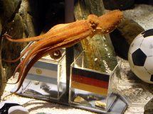 Chobotnice se nemohla dlouho rozhodnout, jestli vybrat Německo nebo Argentinu