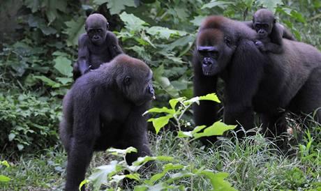 Záchranná stanice pro primáty Limbe Wildlife Centre