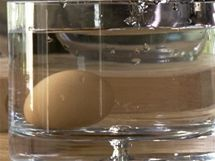 Než se pustíte do přípravy krému pro tiramisu, ověřte si, že máte čerstvá vajíčka - ve slané vodě musí klesnou na dno