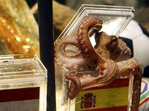 Chobotnice Paul zvolil za mistry světa Španělsko
