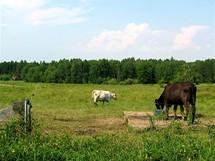 Pastviny kolem Skalska