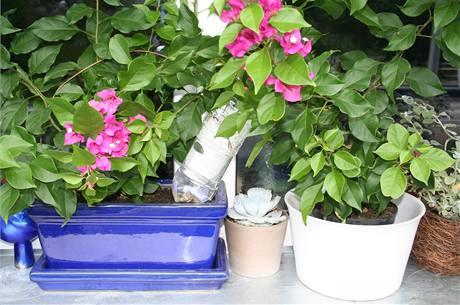 Do víčka PET lahve provrtejte několik děr, naplňte ji vodou, zašroubujte, zastrčte do hlíny v květináči a opřete o okno nebo o stěnu