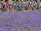Levandule a cyklistická Tour de France.