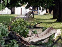 Bouřka poškodila staleté lípy před klášterem v Teplé na Karlovarsku