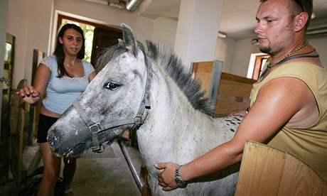 Nové přírůstky v brněnské Zoo - získala dva poníky plemene mini appaloosa.