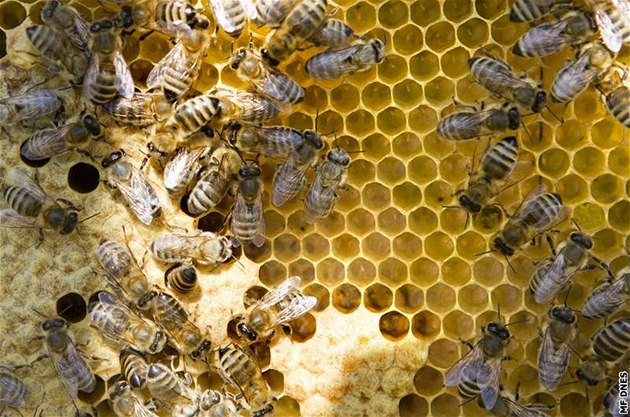 Včelín