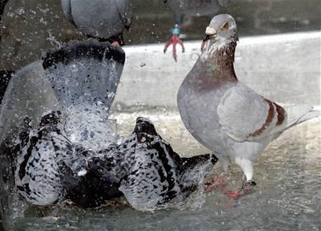Miláčci Karla Klemense se rádi koupou pod proudem vody ve voňavé soli
