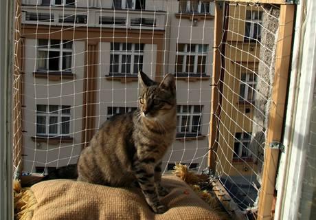 Kočičí výběh chrání síť