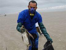 Moře vyplavilo na brazilské pláže stovky mrtvých tučňáků (20. července 2010)