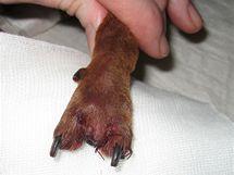 Po operaci veterinární lékař ránu každý den kontroloval a převazoval