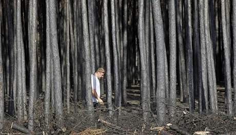 Vyhořelý les u ruské Voroněže (31. července 2010)