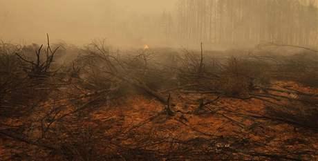 Zbytky shořelého lesa u vesnice Kadanok (3. srpna 2010)